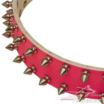 Nickel spikes on leather collar