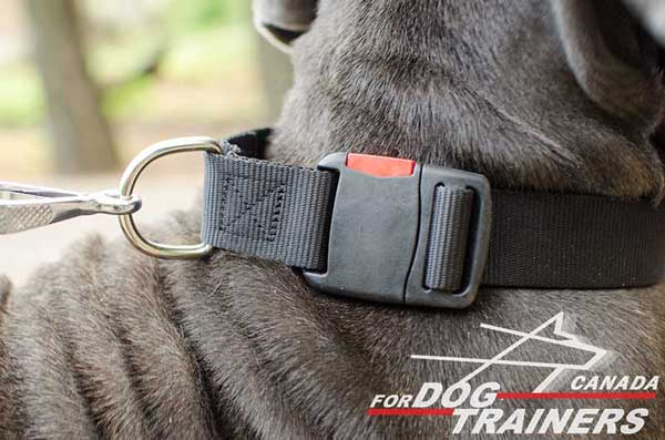 Dog Nylon Collar with Steel Nickel Plated D-ring