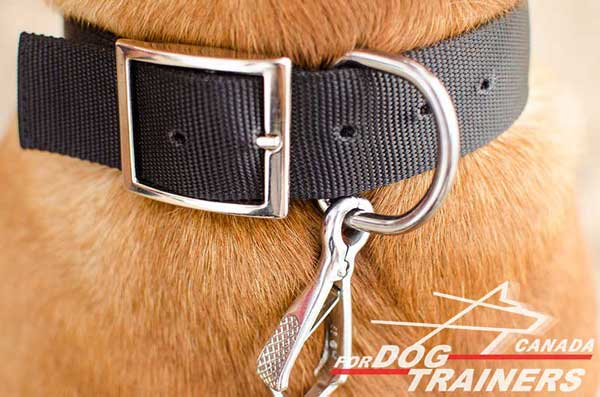 Dog Nylon Collar with Steel Nickel Plated Hardware