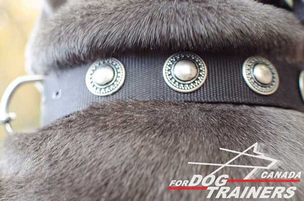 Nylon Collar for Canine Training