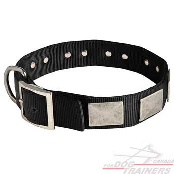 Nylon Collar for Canine Walking and Training