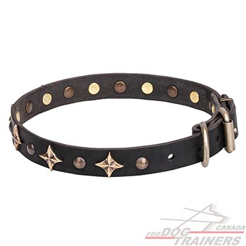 Everyday walking leather canine collar with decorations