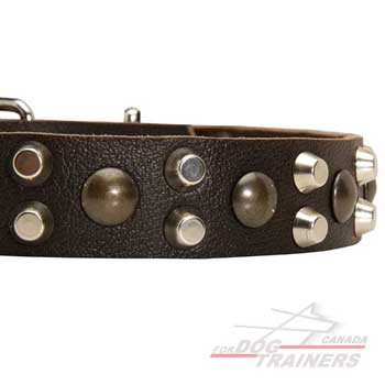 Pyramids and studs on leather collar