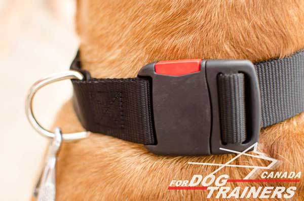 D-ring and Quick Release Buckle on All Weather Nylon Collar