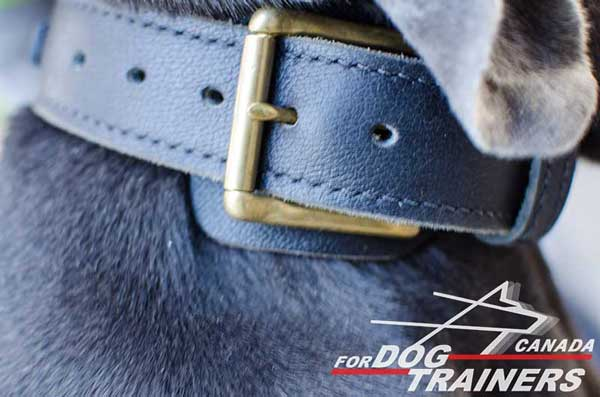 Dog braided leather collar with rust-proof buckle