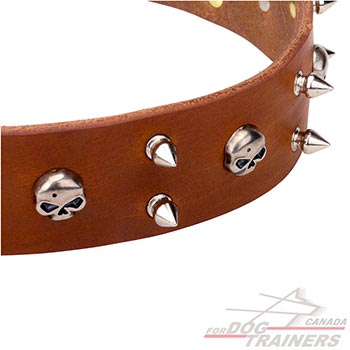 Tan leather dog collar for walking