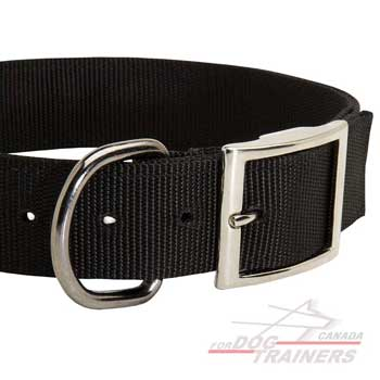 Steel Nickel Plated Hardware on Walking Dog Collar