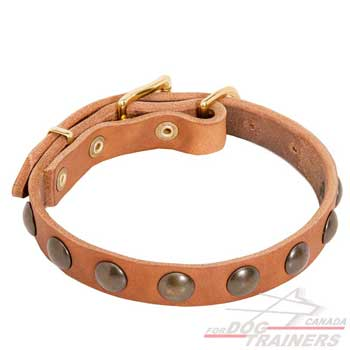 Elegant Leather Collar in Tan Color