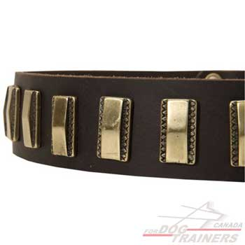 Brass plates on leather collar for dog walking in style