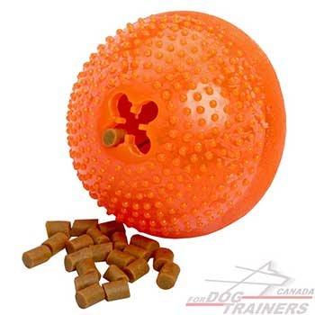 Large Dog Toy for Overactive dogs