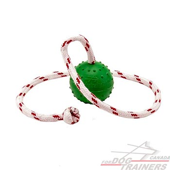 Dog bite ball with hard string