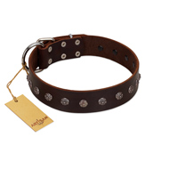 """Graceful Classic"" Mod FDT Artisan Brown Leather dog Collar"