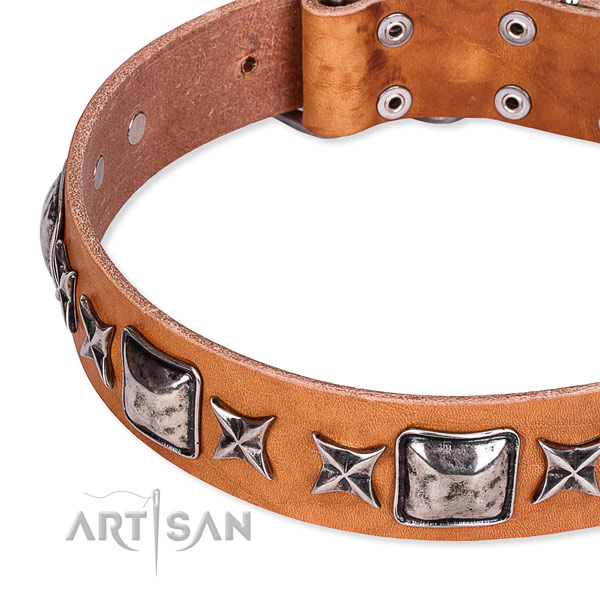 Everyday use studded dog collar of durable full grain leather