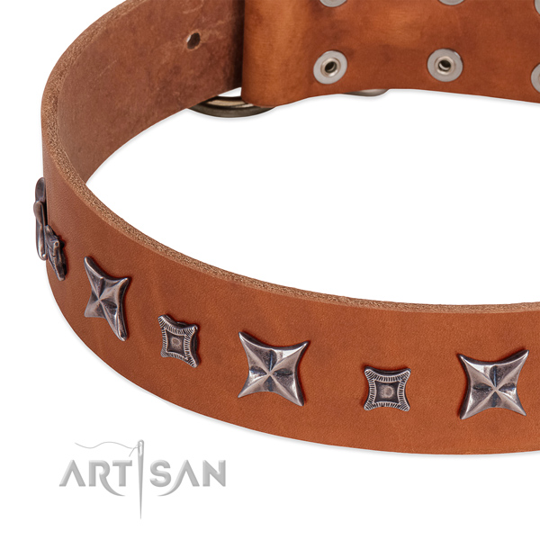 Incredible leather collar for your attractive canine