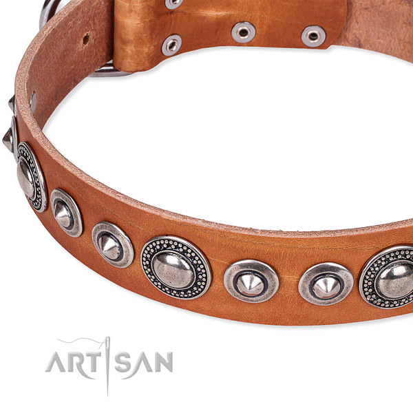 Everyday use adorned dog collar of finest quality full grain genuine leather