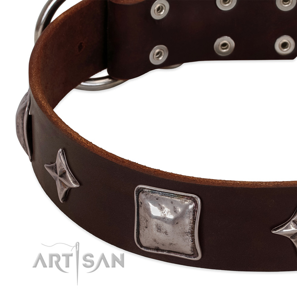 Everyday walking full grain genuine leather dog collar with fashionable embellishments