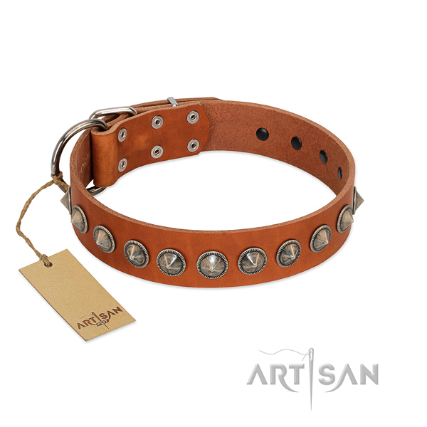 Natural leather dog collar with exceptional studs made pet