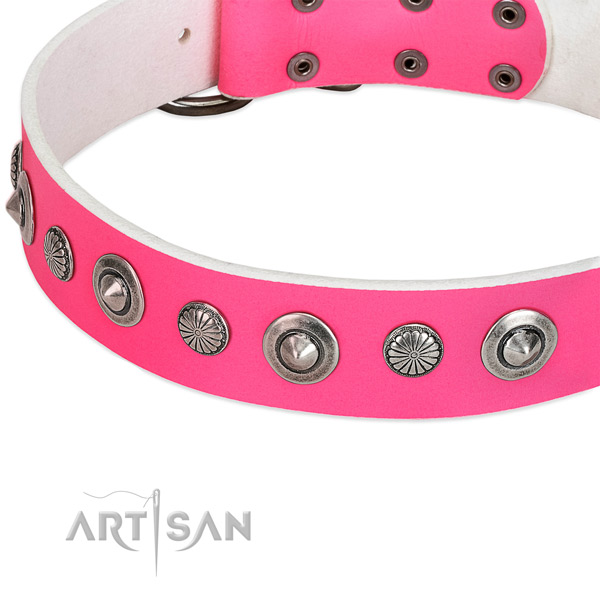 Leather collar with corrosion proof fittings for your handsome dog