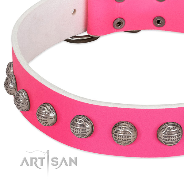Comfy wearing genuine leather dog collar with remarkable studs