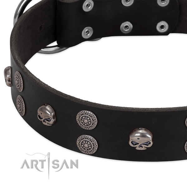 Top rate full grain natural leather dog collar with trendy embellishments