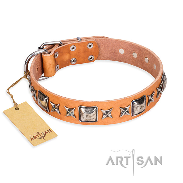 Everyday walking dog collar of top quality genuine leather with decorations