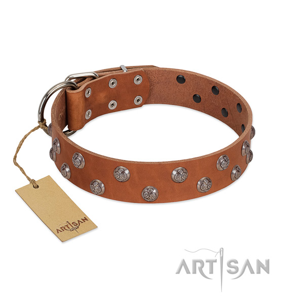 Significant full grain natural leather dog collar with rust resistant fittings