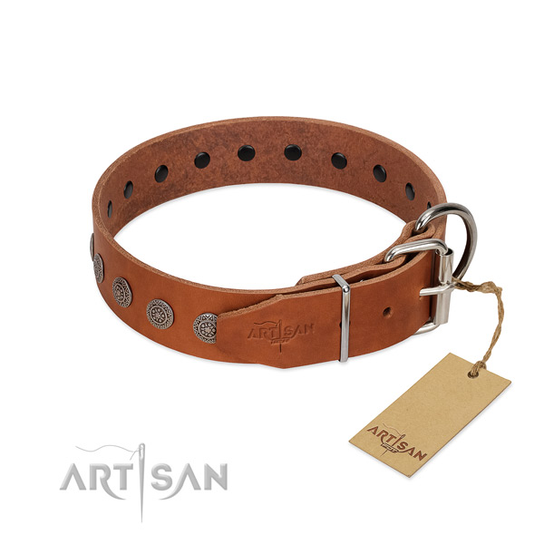 Designer studs on full grain leather collar for stylish walking your dog