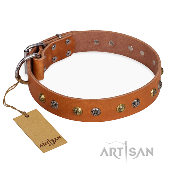Walking fashionable dog collar with durable traditional buckle