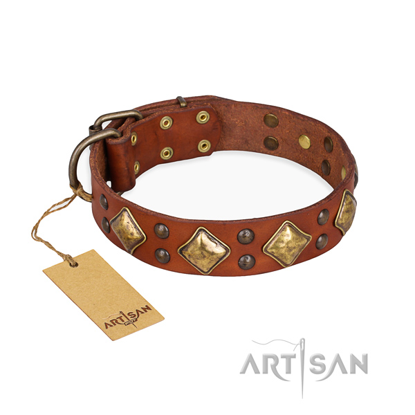 Daily walking adorned dog collar with strong traditional buckle
