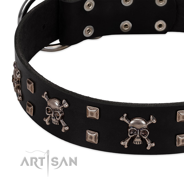 Significant collar of leather for your impressive dog