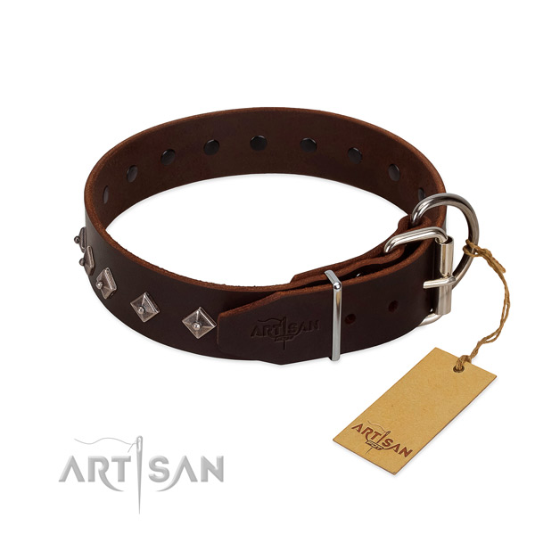 Unusual studs on genuine leather collar for stylish walking your four-legged friend