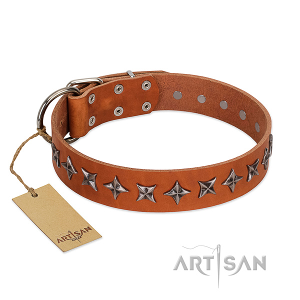 Daily use dog collar of best quality full grain natural leather with embellishments