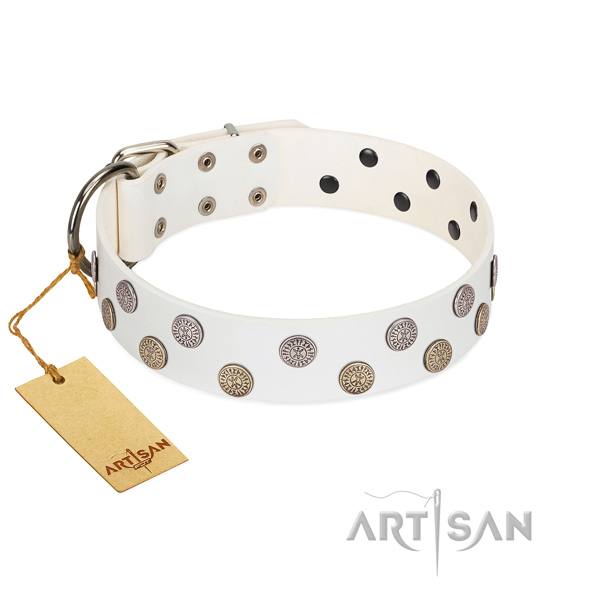 Fashionable adornments on natural leather collar for everyday walking your canine