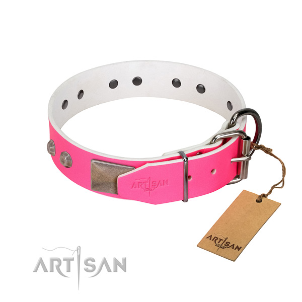 Stylish walking dog collar of genuine leather with remarkable studs