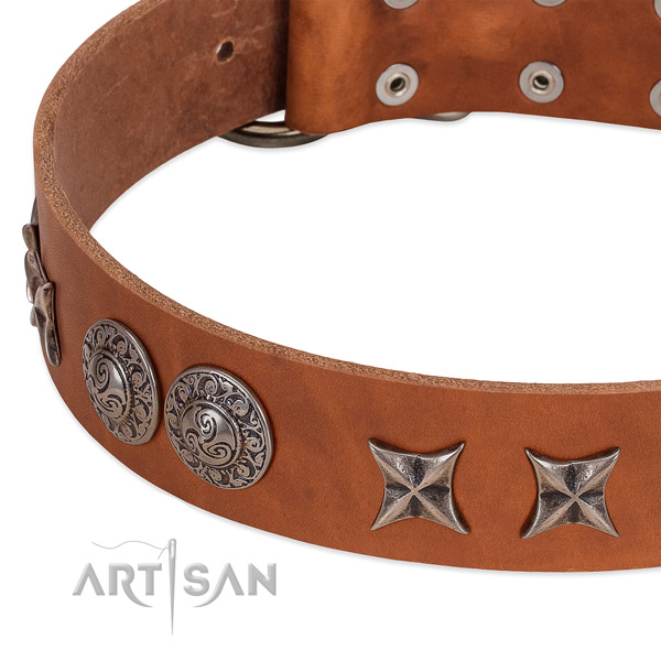 Stunning leather dog collar with corrosion proof traditional buckle
