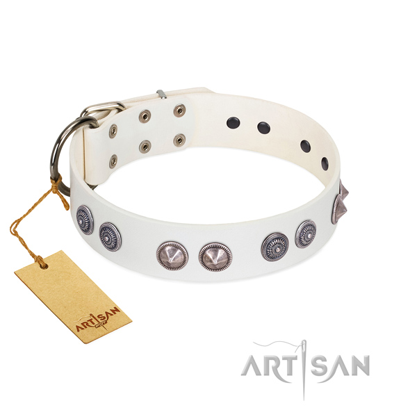 Best quality leather dog collar with reliable traditional buckle