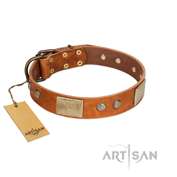 Easy wearing leather dog collar for walking your pet