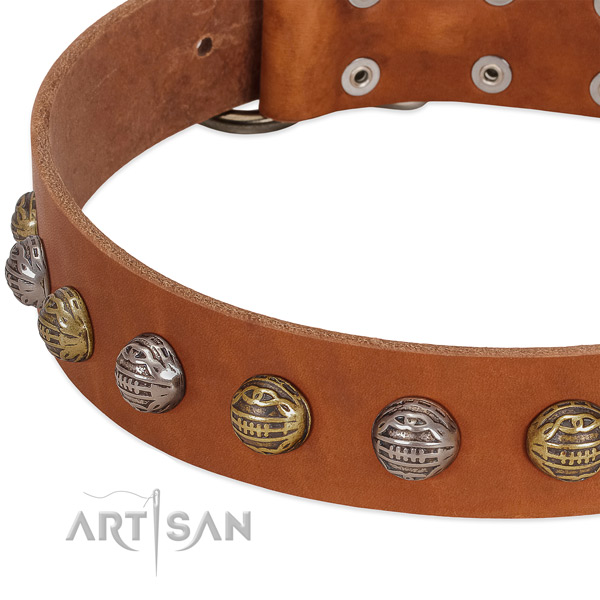 Reliable buckle on full grain natural leather collar for basic training your doggie