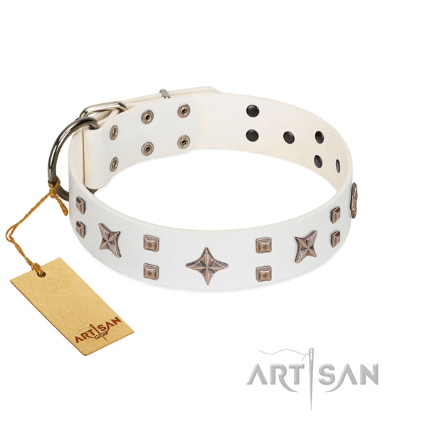 Everyday use genuine leather dog collar with remarkable studs