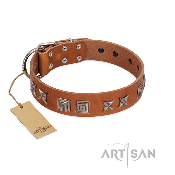 Leather dog collar with fashionable embellishments created four-legged friend