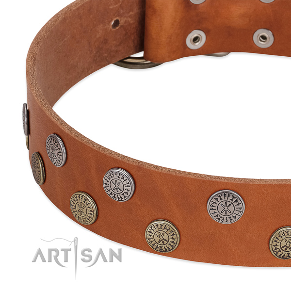Stunning genuine leather collar for fancy walking your pet