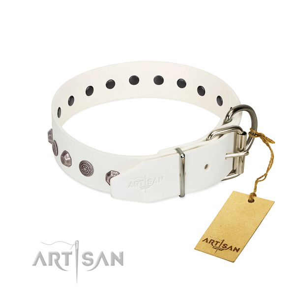 Durable buckle on full grain leather dog collar for stylish walking your pet