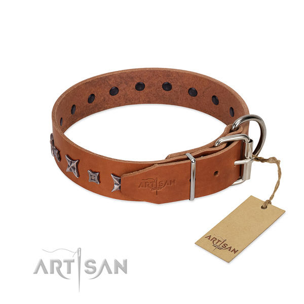 Genuine leather dog collar with stunning studs made dog