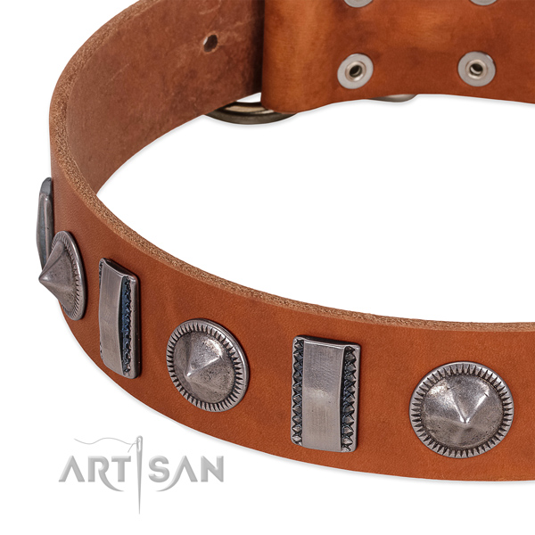 Incredible studded full grain genuine leather dog collar for everyday walking