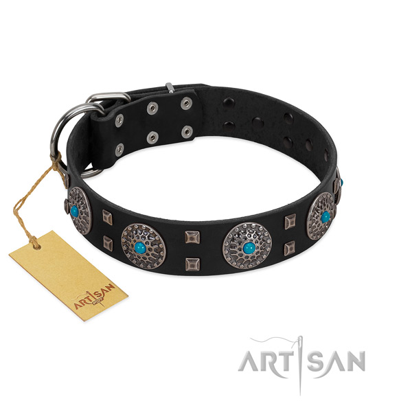 Walking full grain leather dog collar with awesome embellishments