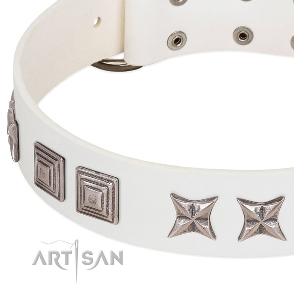 Stylish walking leather dog collar with exceptional embellishments
