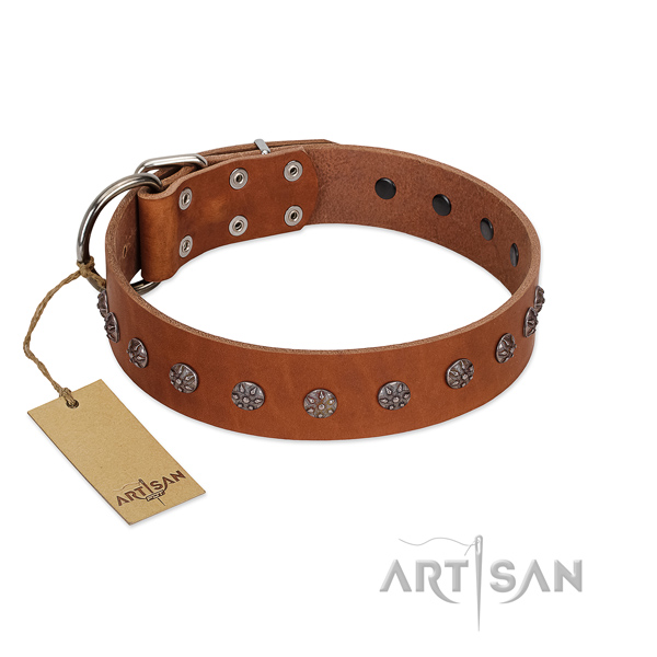 Fancy walking full grain leather dog collar with inimitable decorations