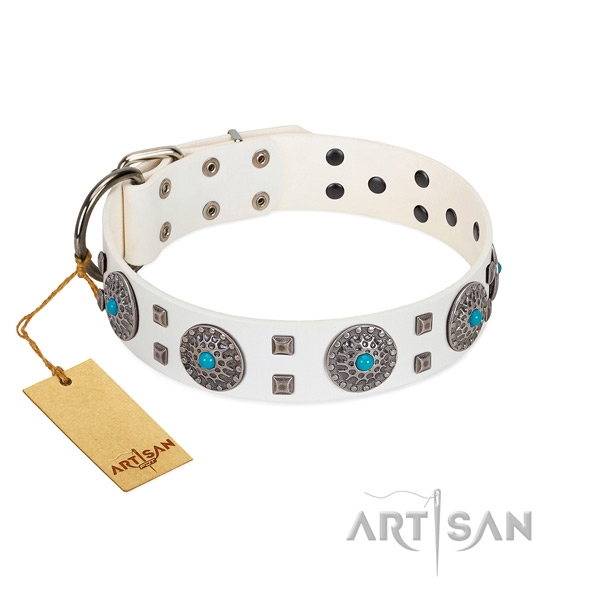 Everyday walking full grain genuine leather dog collar with significant embellishments