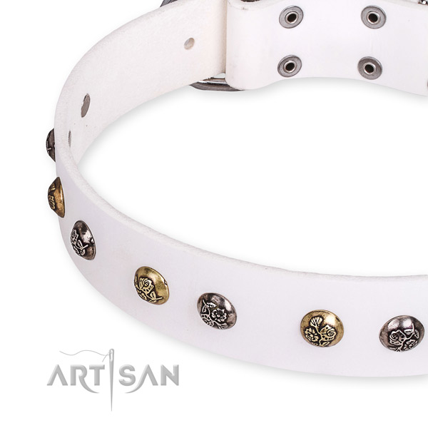 Leather dog collar with awesome durable adornments
