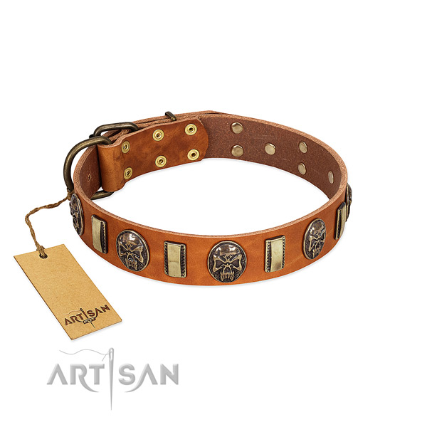Stylish genuine leather dog collar for daily use